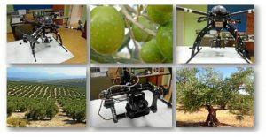 cultivo de precisión del olivo
